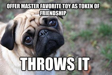 Sad Animal Memes - the funniest first world dog problems memes