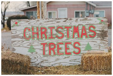 christmastree lot utah tree lot photos