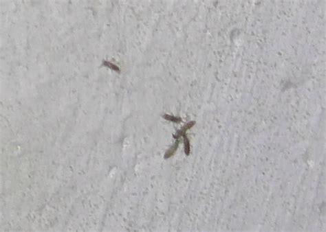 wand feucht insektenbefall insekten schimmel
