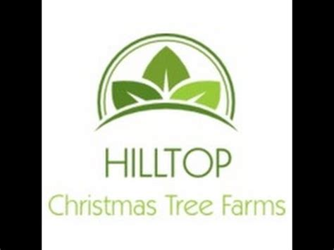 hilltop christmas tree farms young christmas trees outside