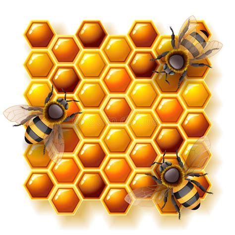 miele alimento api e miele illustrazione vettoriale illustrazione di