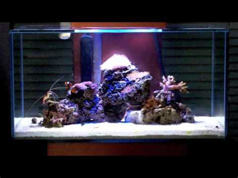 fluval edge marine light marine fluval edge nano reef with saltwater blue leds