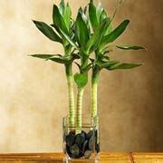 piante decorative da interno piante da appartamento resistenti piante da interno