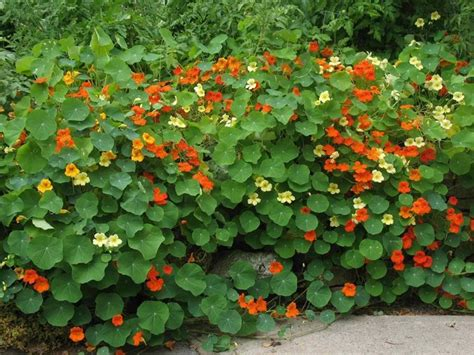 giardino con fiori piante da giardino con fiori piante da giardino piante