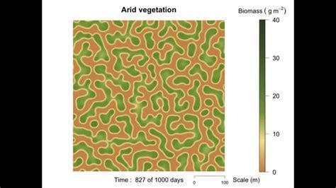 pattern formation of vegetation pattern formation of arid vegetation youtube
