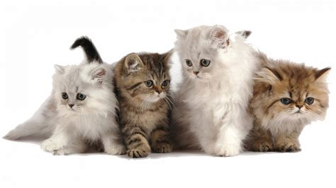 puppies and kittens together pictures of cats and dogs together pictures 1 breeds picture