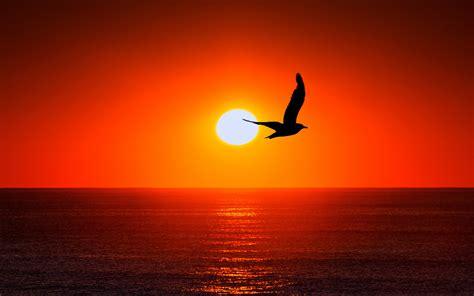 wallpapers hd sunset sea bird silhouette
