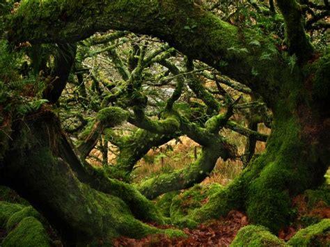 nienhagen wood alemanha wistman s wood devon england delightful dartmoor