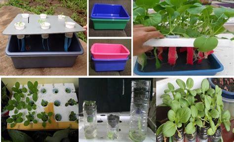 biaya membuat rumah hidroponik cara mudah menanam sawi hidroponik sendiri di rumah dengan