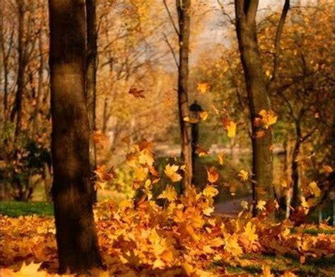 l assiuolo analisi testo novembre pascoli testo 28 images poesie pascoli