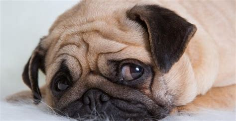 depressed puppy is your depressed depression in dogs