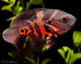For the September 28, 2011 Pet Fish Talk Show.