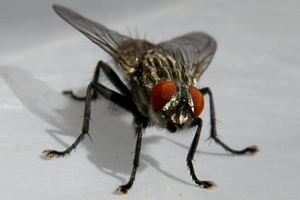 Bed Bugs In Ohio Flying Insect Control Greater Dayton Ohio And The Miami