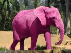 Big Pink Elephant In The Room by Pink Elephants Chat And Thisisbigbrother