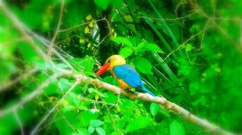 Grand Borneo Unik borneo birds picture of kinabatangan river sabah