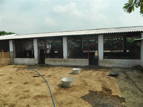 Low Cost Goat Shed by