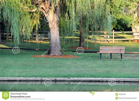 bench day grass park bench day stock image cartoondealer com 48302707