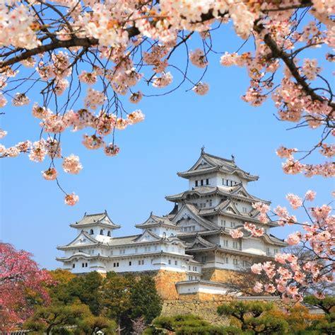 imagenes del japon jap 243 n con los cerezos en flor gu 237 a para celebrar el hanami