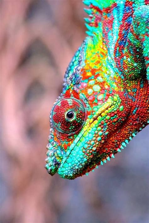 colorful lizard colorful lizard i want to paint