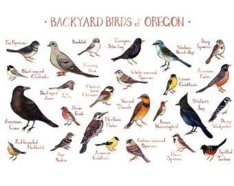backyard birds of texas west virginia backyard birds field guide art print