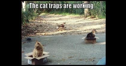 Cat Trap Meme - cat traps are working cardboard boxes meme funny wititudes