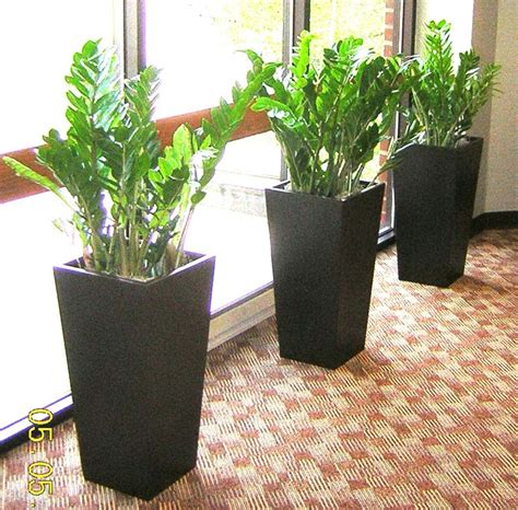 indoor plants india 17 best images about indoor on pinterest office plants