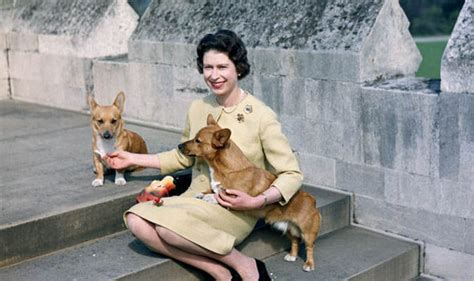 queen s dog throne to the dogs the queen and her most loyal