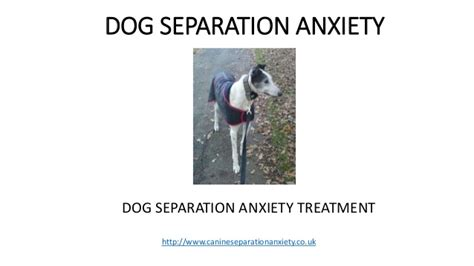 separation anxiety medication separation anxiety treatment
