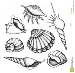 sea shells set stock vector image 57139559