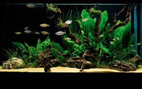 aquascape setup easy aquascape setup aquascape pinterest simple and tanks