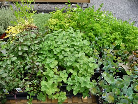herbal garden reese s plants