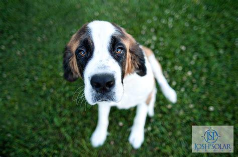 wayside waifs dogs kansas city photographer wayside waifs may 28