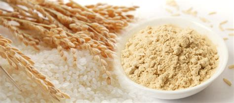 protein rice global rice protein market 2017 key trends