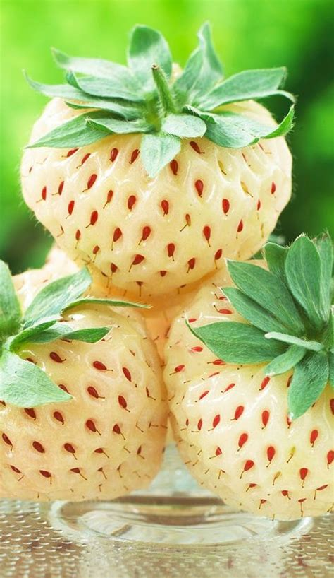 grow pineberries   expensive strawberry