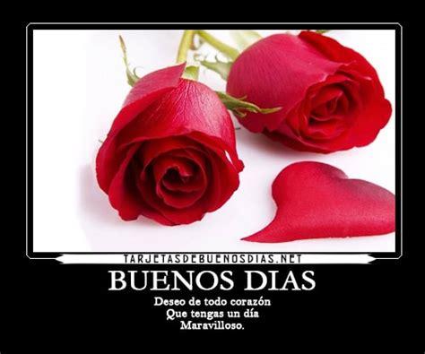 imagenes rosas rojas de buenos dias las mejores im 225 genes de buenos d 237 as con rosas preciosas
