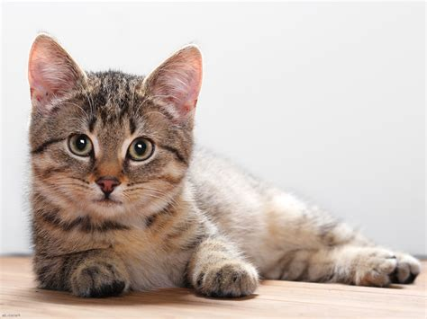 Cat's Tale: Meowing for the right kind of food - Zee Lifestyle Cat