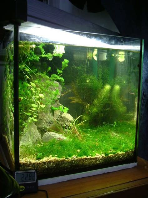 aquascape shrimp tank 17 best images about cube aquascape ideas on pinterest