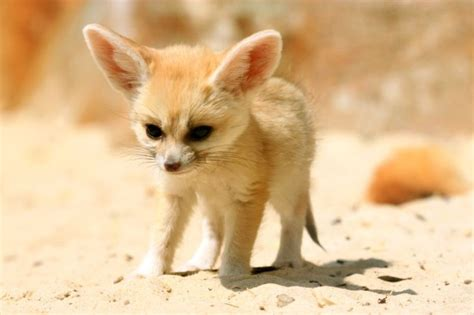 10 cutest most cuddly exotic pets