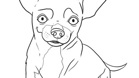 coloring page of chihuahua chihuahua coloring pages coloring pages for free