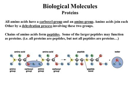 Mba 2 Biological Molecules by Atoms Molecules And Chemistry Ppt