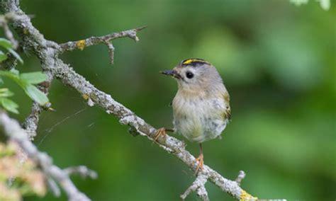 small garden birds pictures pdf