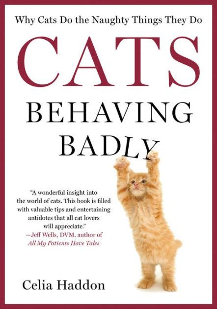 Where Do They Sell Barnes And Noble Gift Cards - cats behaving badly why cats do the naughty things they do by celia haddon hardcover