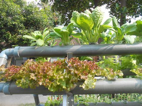 Jual Pupuk Hidroponik Organik nutrisi hidroponik organik jual nutrisi hidroponik