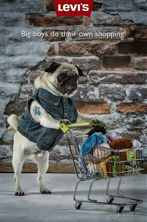 pug ad 17 best images about pugs in costumes on pug costumes and pug