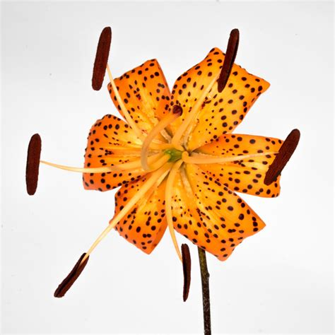 the true guide to tiger lily tattoos you wouldn t want to miss