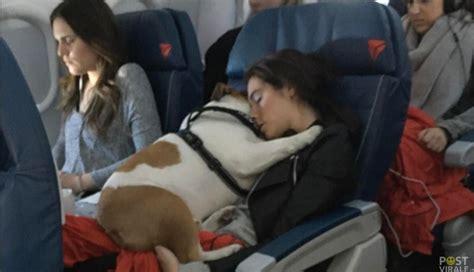 alitalia cani in cabina mai pi 249 in stiva adesso i nostri cani potranno viaggiare
