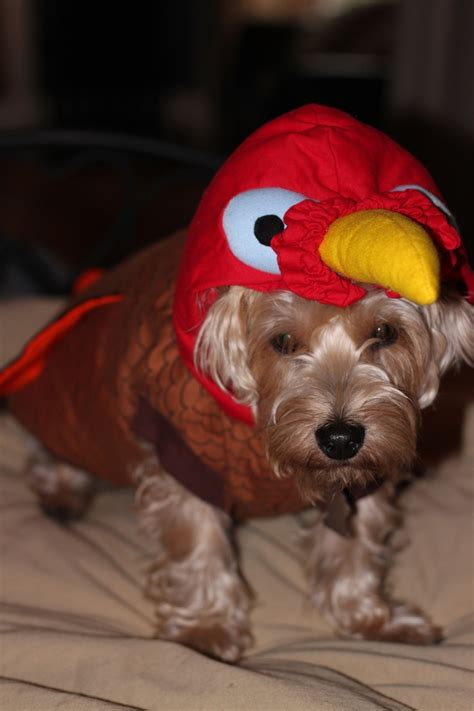turkey for dogs turkey costume for your best friends forever always