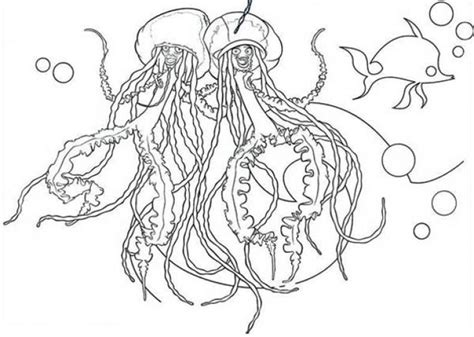 jellyfish coloring page for adults 1099 best images about coloring pages on pinterest dover