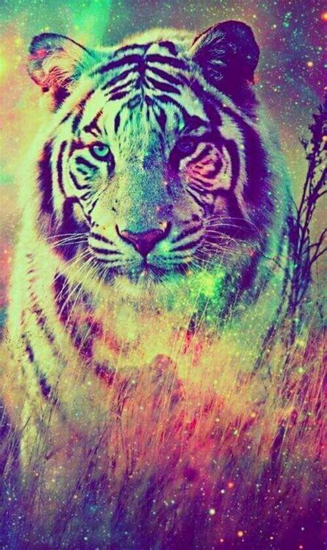 wallpapers of colorful animals colours background all the things i pinterest