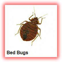 bed bug treatment  ikeja lagos